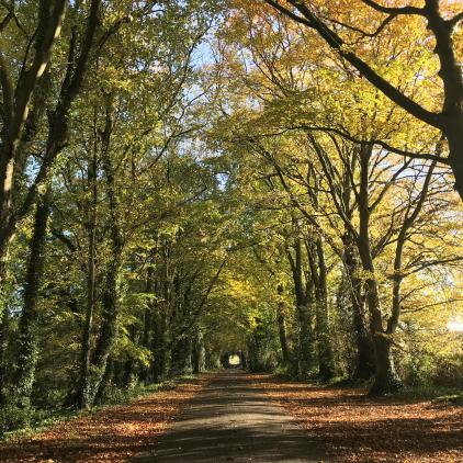 What is currently on offer to support Woodland Creation?